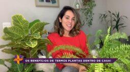 Ver Mais Sustentabilidade: os benefícios de plantas dentro de casa