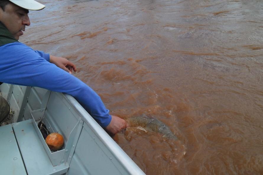 Período de pesca no Paraná é alterado para preservar espécies nativas