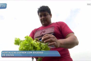 Excesso de chuva prejudica a produção de hortaliças