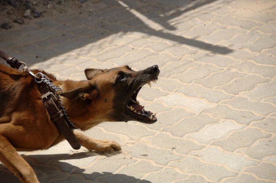 Conheça 5 raças de cachorro perigosas, segundo especialistas