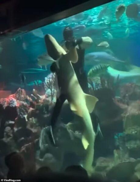 Mergulhador é flagrado dançando com tubarão em vídeo incrível; assista!