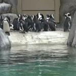 Crianças em casa? Passeio por zoológicos online é uma opção para entreter na quarentena