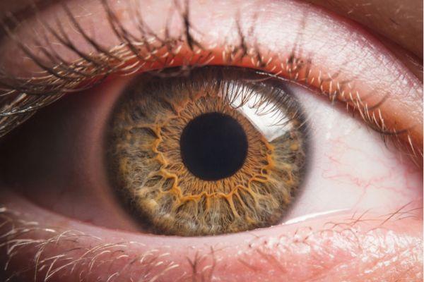 Doenças podem se revelar por meio de alterações nos olhos