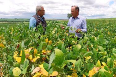Orientações técnicas ajudam a melhorar cultivo de soja em solo arenito caiuá