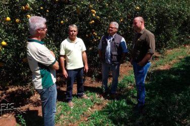 Agricultor diversifica produção e mantém bons resultados em Floraí