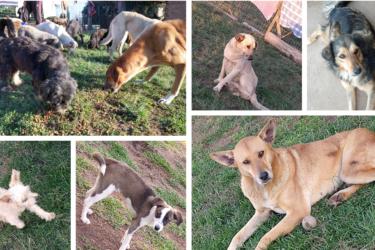 Ação solidária arrecada ração para mais de 100 cães abandonados em Campo Magro