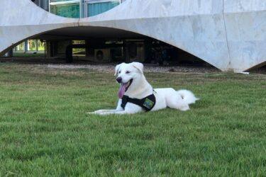 Família Bolsonaro adota cachorro, mas ele tinha dono e é devolvido