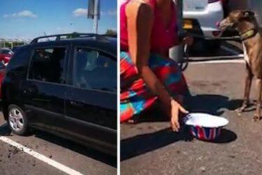 Grupo de pessoas quebra vidro de carro para salvar cachorro deixado no calor de 43 ºC