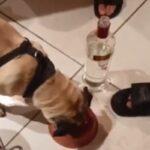 """Rapaz afirma que não deu álcool a cachorro: """"foi uma brincadeira"""""""