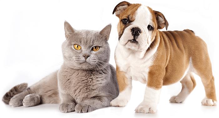 Cuidados com Pets: Por que cães amam e gatos odeiam água?