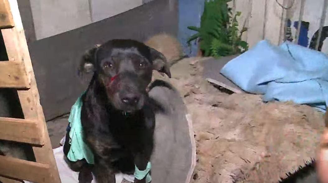Homem bêbado invade casa, persegue moradora e dá facadas em cachorros, em Curitiba