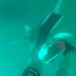 Jovem chuta cabeça de tubarão para escapar de ataque; veja imagens!
