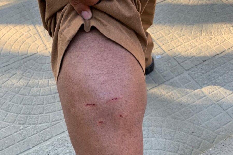 policial-ataca-cachorro-rua-2