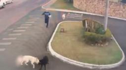Homem salva cachorro de estimação do ataque de 2 pitbulls em Ponta Grossa