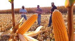 RIC Rural acompanha colheita de milho em Apucarana