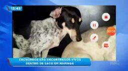 Cachorros são encontrados vivos dentro de saco em Maringá