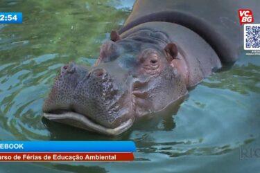 Programa de família: visitação virtual no zoológico em forma de curso de férias