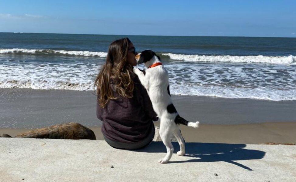 Adoções de animais de estimação aumentam durante a quarentena
