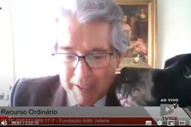Vídeo: cachorro de conselheiro 'invade' sessão virtual de tribunal