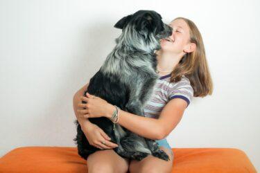Estudo afirma que cães podem farejar coronavírus em saliva