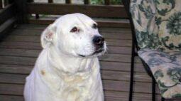Conheça Camie, o cão que quebrou porta e salvou mulheres de agressão