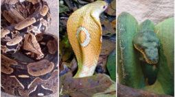 Cobras no Distrito Federal: 20 serpentes já foram resgatadas; confira espécies