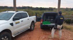 PRF apreende 300kg de maconha em caminhonete roubada