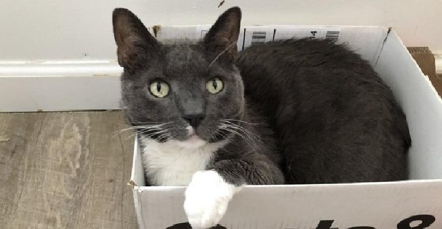 Gato é diagnosticado com coronavírus no Reino Unido