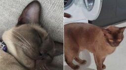 Gato sobrevive após passar 12 minutos dentro de máquina de lavar no ciclo quente
