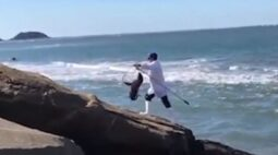 Lobo-Marinho resgatado na Praia Central de Guaratuba não resiste e morre