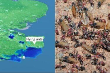 Após gafanhotos, nuvem de formigas voadoras é captada por radar