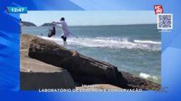Lobo-marinho resgatado em Guaratuba recebeu atendimentos mas morreu