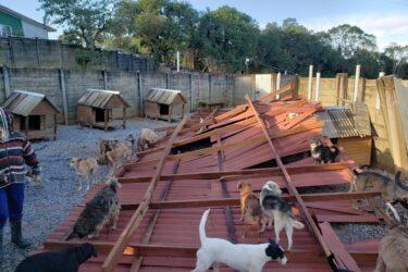 Temporal destrói abrigo com quase mil animais, em Campo Magro