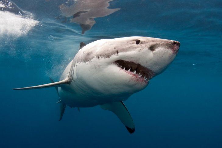 Tubarão ataca barco e puxa criança de 10 anos pra dentro da água