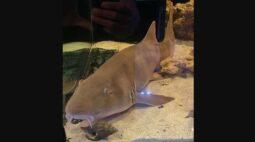 Chácara do DF que tinha cobras também escondia três tubarões