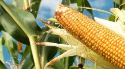 Safra de grãos é estimada em quase 41 milhões de toneladas no Paraná