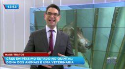Cães se comiam vivos no quintal: dona dos animais é uma veterinária