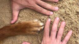 Amor à primeira vista: conheça a história de adoção do cachorro Cajú