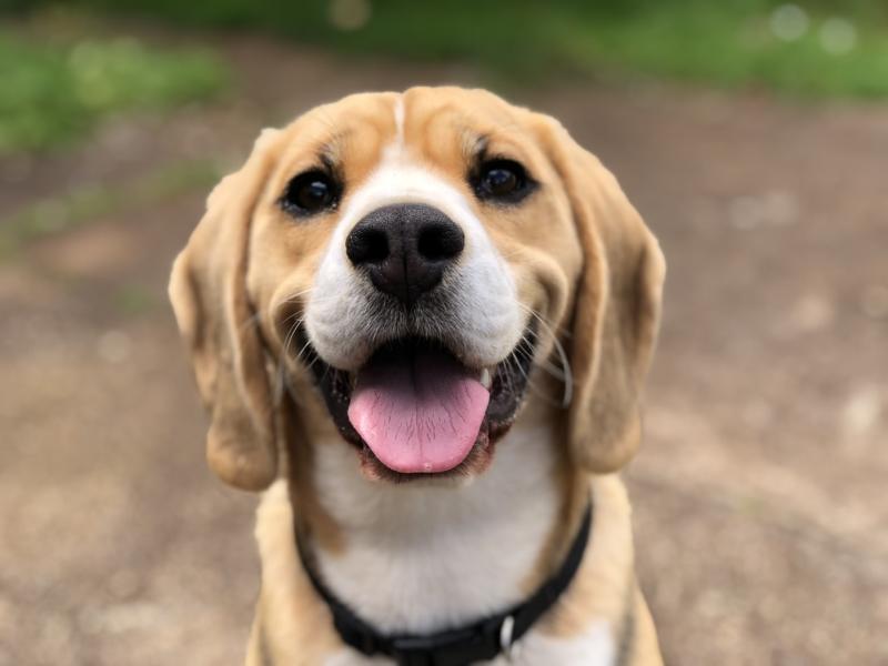 CMC confirma incentivo à adoção de animais