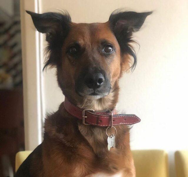 Cachorro Cajú