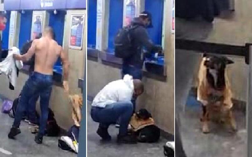 Homem tira a camiseta para vestir cachorro com frio; veja!