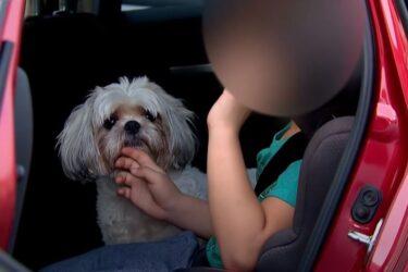 """Reencontro emocionante: cachorro """"terapeuta"""" de criança com autismo é encontrado"""