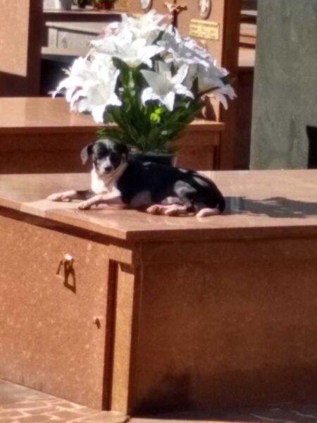 Há 8 meses, cachorro mora no túmulo do antigo dono no Cemitério de Maringá