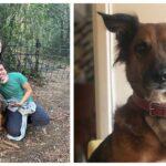 Vídeo mostra encontro emocionante entre o cachorro Cajú e seus tutores