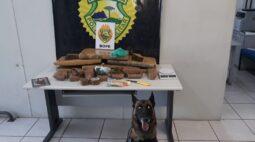 Com ajuda de cão, PM encontra maconha e prende casal em Curitiba