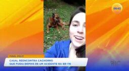 Casal reencontra cachorro que fugiu depois de um acidente na BR-116