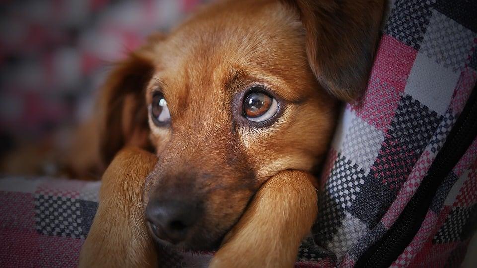 Lei para multar latidos de cachorros é aprovada com unanimidade