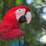 Novo horário de funcionamento do Parque das Aves a partir de 1⁰ de setembro
