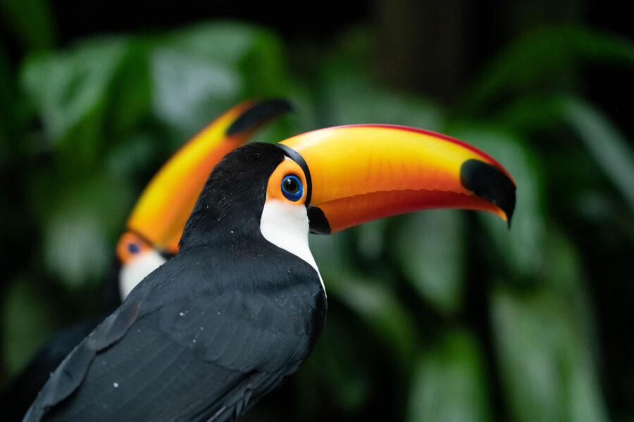 Parque-das-Aves