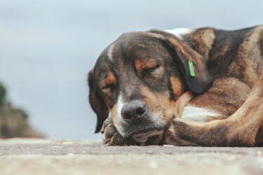 Seis ações simples que podem amenizar o frio dos animais que vivem nas ruas